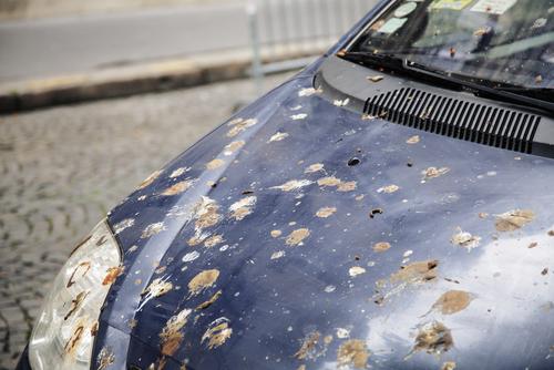 Bird Droppings. Definitely Wash Them Off Immediately